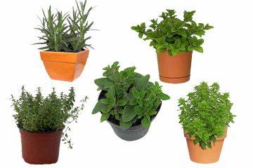5 plantas comestibles que debes tener en tu cocina